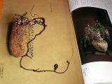 Japanese Traditional Ikebana Photo Book from Japan flower bonsai