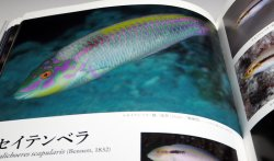 Photo1: A Photographic Guide to WRASSES of Japan book Japanese Labridae fish