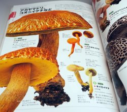 Photo1: Actual size of the mushrooms can be seen in comparison Japanese book