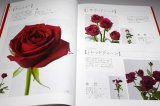 The Encyclopaedia of Cut Roses 1 : RED PINK BI-Color from Japan Japanese