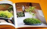 MINI SMALL BONSAI PHOTO BOOK from Japan