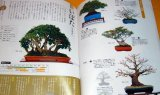 Make BONSAI understands with photographs book from japan japanese