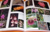 Picture book of Mysterious Orchid in the world book flower orchidaceae