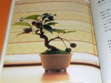 Let's Begin Miniature BONSAI book Japan Japanese mini little