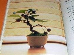 Photo1: Let's Begin Miniature BONSAI book Japan Japanese mini little