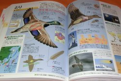 Photo1: KIDSPEDIA : ENCYCLOPEDIA FOR JAPANESE CHILDRED book from Japan Shogakukan