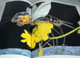 Kumada Chikabo's  Picture book art book from Japan Insect Animal Bird