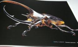 Photo1: Rhinoceros Beetles : Micro Presence 4 book from Japan horned kabutomushi