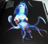 CEPHALOPODS, amazing and beautiful creatures photo book squid octopus