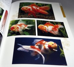 Photo1: Goldfish Breeding book from Japan Japanese KINGYO