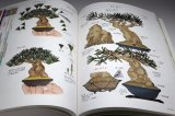 SMALL TREE BONSAI All Illustration Introduction book from Japan Japanese