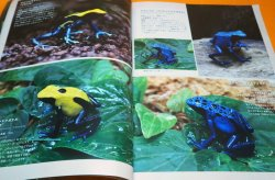Photo1: Poison Dart Frog & Paludarium Book from Japane Japanese