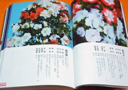 Photo1: RHODODENDRON INDICUM PICTORIAL BOOK OF THE 1000 VARIETIES OF SATSUKI Japan