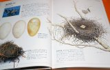 JAPANESE WILD BIRD NEST AND EGG PICTORIAL BOOK FROM JAPAN