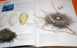 Photo1: JAPANESE WILD BIRD NEST AND EGG PICTORIAL BOOK FROM JAPAN