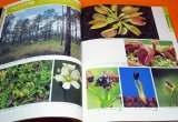 AMAZING WORLD OF THE CARNIVOROUS PLANTS BOOK FROM JAPAN JAPANESE