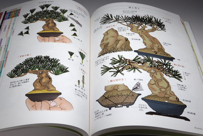 Small Tree Bonsai All Illustration Introduction Book From Japan Japanese Books Wasabi